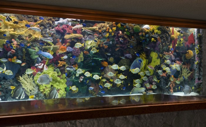 Lobby Aquarium | Suites at Mirage Resort & Casino