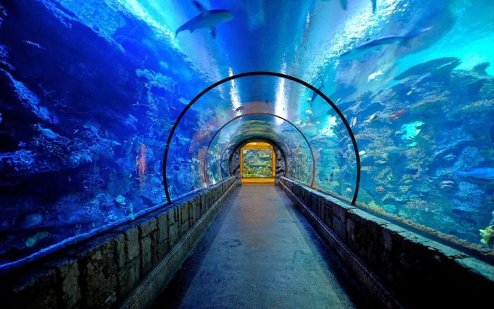 Shark Reef | Suites at Mandalay Bay Resort and Casino